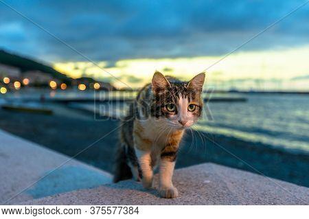 Female Cat Of Marciana Marina Village, Along The Waterfront At Night In Italy. Marciana Marina Town