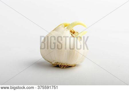 Fresh Organic Germinated White Garlic On A White Table, Isolated On White Background With Soft Focus