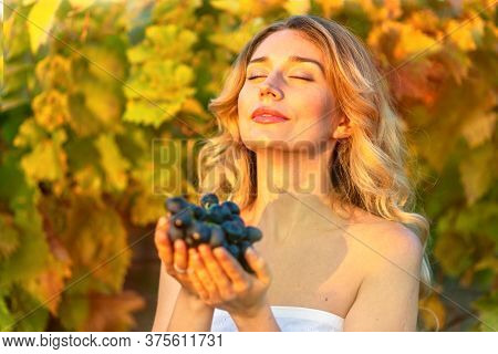Woman Passionate Collecting Grapes From The Vineyard. Vintage Retro Styles