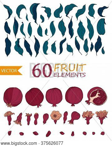 Set Of 60 Pomegranate Elements, Flowers. Seeds And Leaves. Organic Food Vector. Hand Drawn Fruit Sty