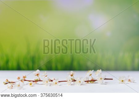 Branch Of Blossoming Cherry On White Wooden Table On Green Background. Incredible Spring Wallpaper.