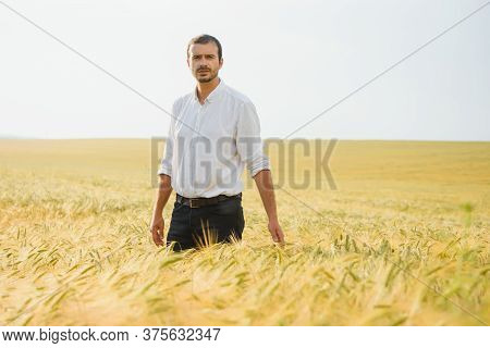 Portrait Of Farmer Standing In Young Wheat Field Holding Tablet In His Hands And Examining Crop.