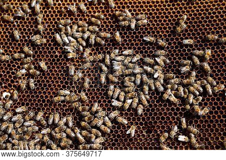 Close-up Of A Honeycomb With A Swarm Of Bees Making Honey In An Apiary
