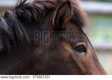 A Close Up Of A Horse Head