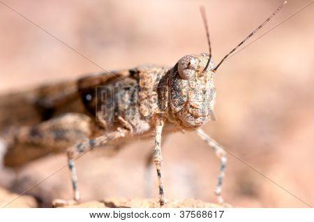 Grasshopper Portrait