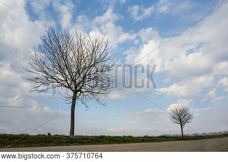Leafless Tress In The Field With A Sky