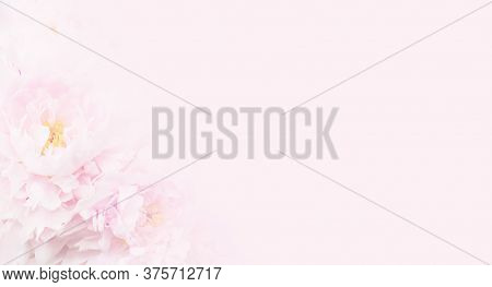 Nice Pink Floral Background For Beauty Salon, Spa Or Beauty Treatments, Rejuvenation Or Intimate Hyg