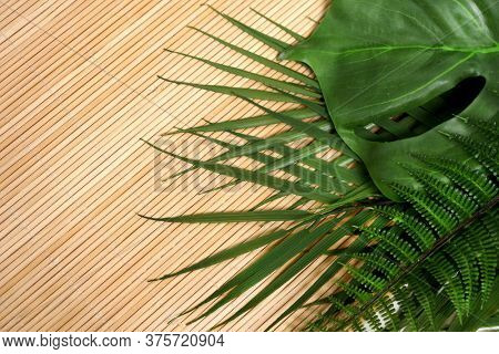 Tropical Green leaves. Summer. Green leaf. Monstera. Fern