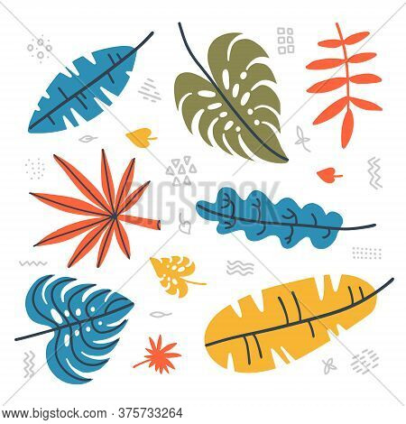 Botanical Set Of Tropical Leavesl. Contemporary Collection Of Hand Drawn Jungle Plants - Palm Leaf,