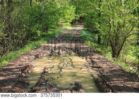 puddle after rain on forest dirt road