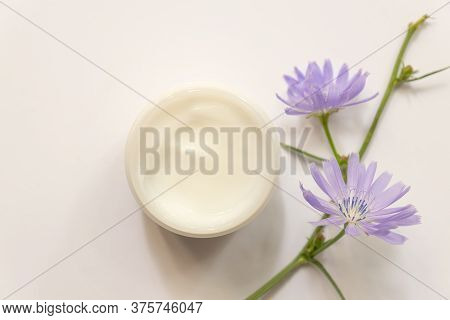 Moisturizing Cream Jar And Chicory Top View . Natural Cosmetology Product, Organic Cosmetics Creativ