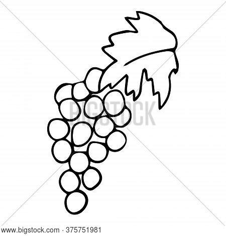 Vector Grape Vine For Restaurant Menu Illustration. Wine Symbols For Restaurant Menu Engraving Grape