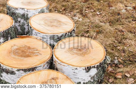 Preparation Of A Firewood, Round Birch Chunks Stands On The Ground, Closeup Photo