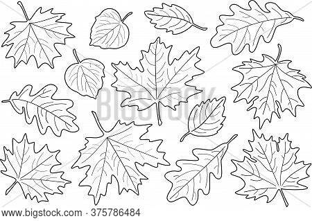 Vector Illustration, Set Of Black And White Leaves. Fall Leaves Silhouettes. Maple, Linden, Oak And