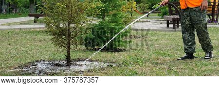 A Utility Worker Or Gardener Is Watering Conifers In A Garden Or Park. City Improvement. Homestead F