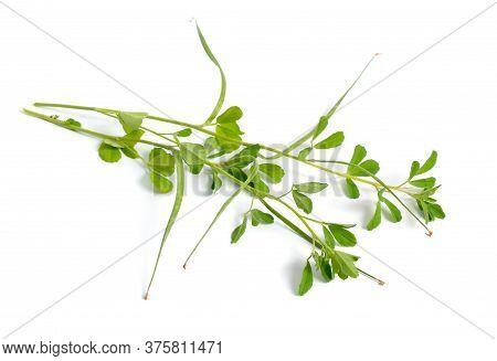 Fenugreek Or Trigonella Foenum-graecum. Green Plant. Isolated On White Background