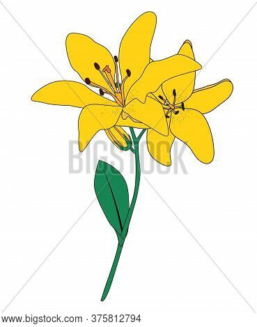 Abstract Hand Drawn Lilly Flower. Vector Illustration