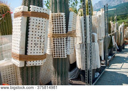 Special Protective Styrofoam Cases With Holes For Packing And Transportation Of Biggest Cactuses For