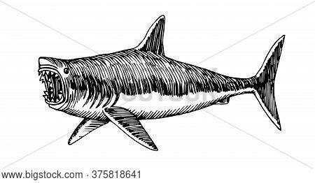 Great White Shark With Open Jaws, Dangerous Sea Predator, Prehistoric Fish Megalodon, Vector Illustr