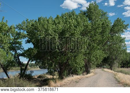 Road Beside A Summer Lake With Cottonwood Trees