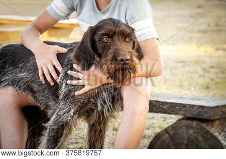 The Boy Hugs His Beloved Dog. Dog Of Breed German Wire-haired Pointing Dog For A Walk With Its Young