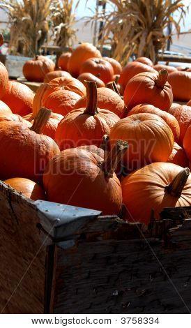 Pumpkins Box