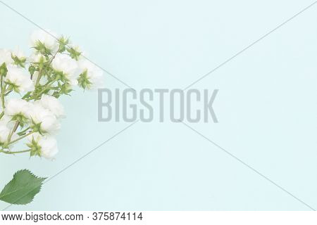 Sprigs Of Roses White On Blue Background, Copy Space. Minimal Style Flat Lay. For Greeting Card, Inv
