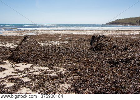 Seaweed Landed On A Beach In Brittany