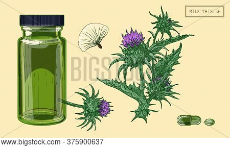 Medical Milk Thistle Plant And Green Glass Vial, Hand Drawn Illustration In A Retro Style