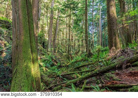 Fallen Trees In The Green Forest Park British Columbia Canada.