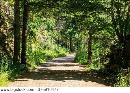 Small Country Park Road With Tall Trees At Sunny Day With Dark Shadows