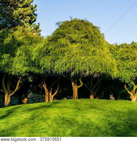 Green Trees In The Meadow Or Lawn In The Park With Blue Sky.