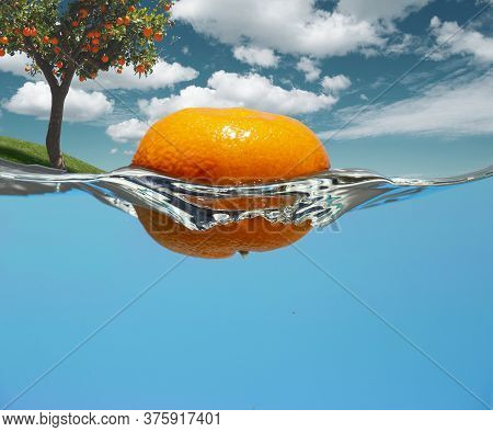 Orange Tree On A Grassy Hill. An Orange Rolled Down A Hill Into The Water.