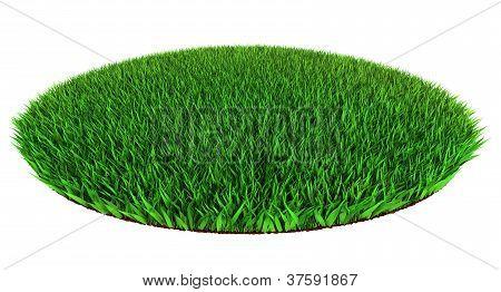 Green Grass Disc Shape