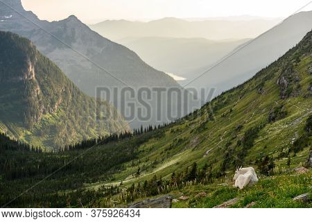 Mountain Goat Sits Above His Kingdom In Montana Mountains