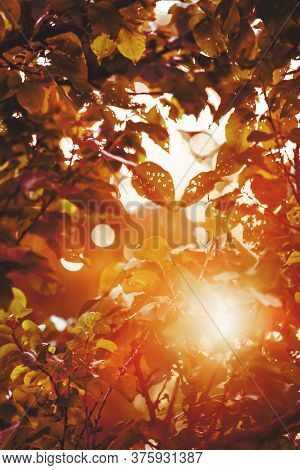 Autumn Blurred Background With Natural Bokeh Https://stock.adobe.com/ru/contributor/97750/alexander-