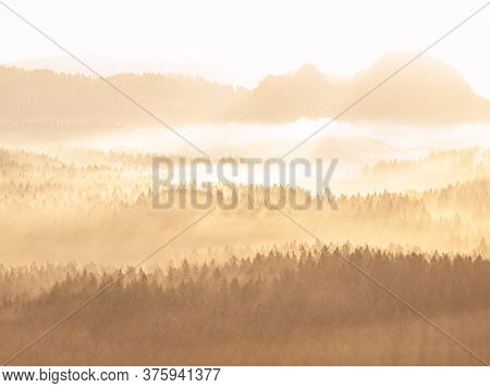Shinning Gentle Mist In Forest Land. Evergreen Coniferous Trees In An Ethereal Landscape With Low La