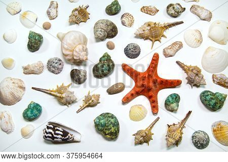 Starfish Shellfish Shells Of Various Shapes Red Green Yellow Isolated On A White Background, Sea Wor