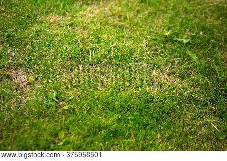 Green Grass Texture Background. Top View Of Grass Garden. Lawn Pattern Textured Background.