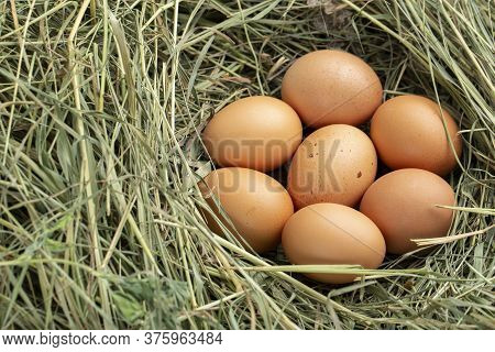 Chicken Eggs In The Hay. View From Above.