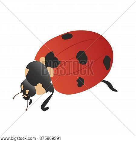 Red Ladybug Top-side View. Ladybird On A Walk, Cartoon. Vector Illustration In Flat Style. Cute Red
