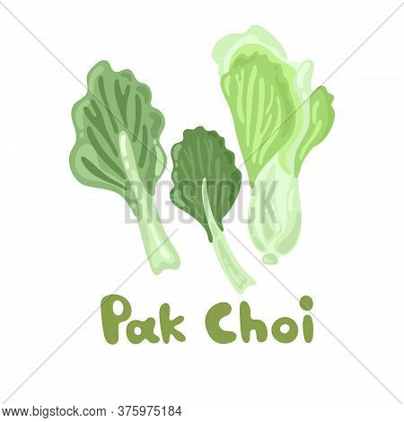 Pak Choi Stock Image. Stem Bok Chay. Chinese Cabbage. Vector Illustration Of A Fresh Pak Choi Isolat
