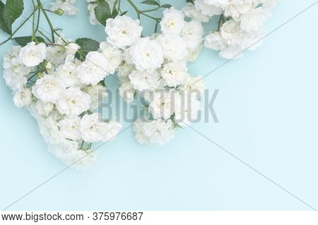 Sprigs Of White Roses On Blue Background, Copy Space.