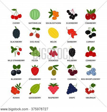 Berries Colored Vector Icons Symbols Set. Business Analysis, Design Elements Berries, Icon Fresh Hea