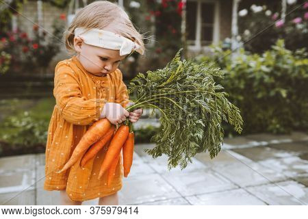 Baby Girl Holding Carrots In Garden Child Eating Healthy Food Lifestyle Vegan Organic Raw Vegetables