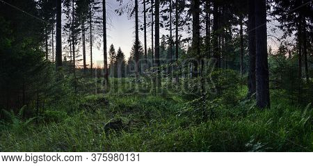 In Wood After Sunset In German Ore Mountains Near Reitzenhain On 30th June 2020