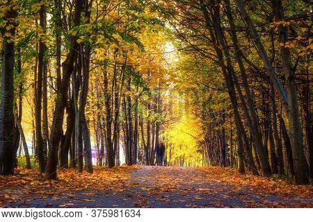 Natural Scenery. Autumn. View Of City Park With Paths. Colorful Leaves Fall On Paths. Man Walks On P