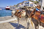 Two donkeys at the Greek island Hydra. They are the only means of transport on the island no cars are allowed. poster