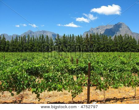 Land Of The Vines