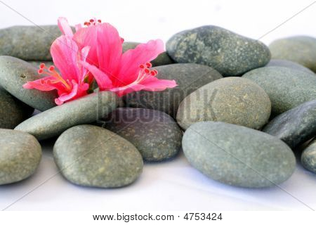 Hibiscus And Stone